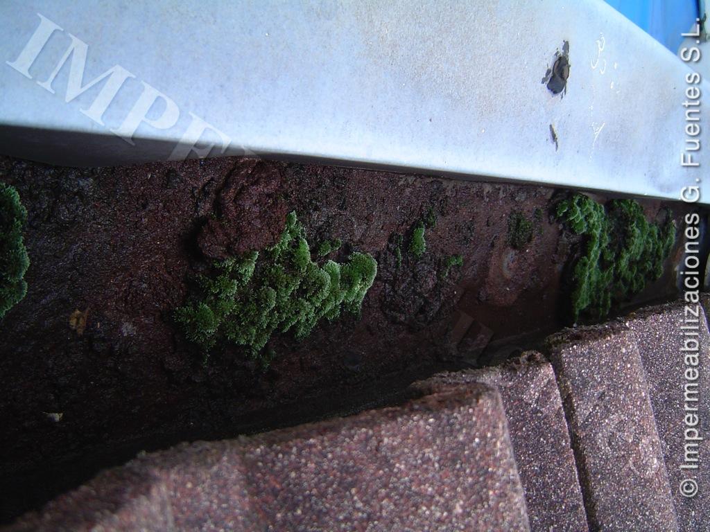 Canales de recogida de aguas con vegetación